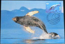 AUSTRALIAN ANTARCTIC TERRITORY 1995 Mi-Nr. 102 MK/MC - Maximumkarten