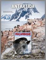 MOZAMBIQUE 2019 MNH Antarctica Antarktis Südpol Antarctique S/S - IMPERFORATED - DH1924 - Faune Antarctique