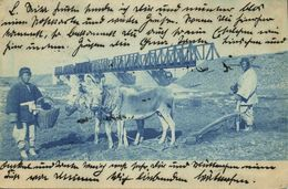 China, Ploughing Donkeys, Railway Bridge In Unknown Chinese Area (1903) Postcard - China