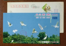 Kingdom Of Egrets,xiangshan Forest Park,China 2006 Attractive Xinjian Landscape Advertising Pre-stamped Card - Birds