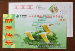 Swan Goose Bird,China 2006 Lindian Post Office Postal Business Advertising Pre-stamped Card - Oies