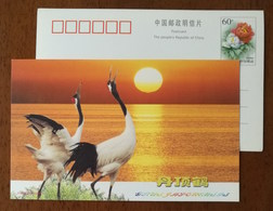 Rare Bird,Red Crowned Crane,China 2000 Zhejiang Nature Museum Advertising Pre-stamped Card - Cranes And Other Gruiformes