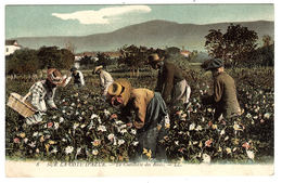 SUR LA COTE D' AZUR - La Cueillette Des Roses - CULTURE - AGRICULTURE - Ed. LL. - 8 - Cultures