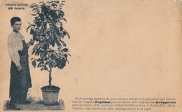 BAILLEUL - CPA Publicitaire Engrais Papillon - Mr Anatole CORDONNIER * - France
