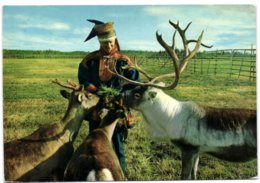 Lappi Lapland Finland - Dainty Bit Ti The Favourites - Finlande