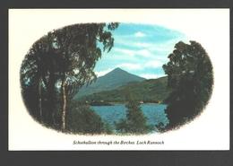 Schiehallion Through The Birches - Loch Rannoch - Perthshire