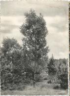9Dp-756: PULDERBOS St Jozefspreventorium Wandelingen... De Postzegel Is Al Weg.. - Zandhoven