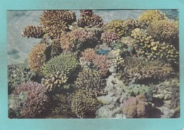 Small Post Card Of Coral Of The Great Barrier Reef,Green Island,Queensland, Australia.,V103. - Sydney