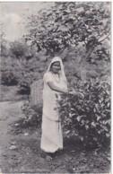 ASIE CEYLAN A TEA PLUCKER - Sri Lanka (Ceylon)