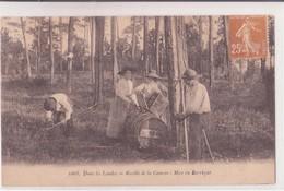 CPA - 1068. Dans Les LANDES  -  Récolte De La Gemme - Mise En Barrique - Autres Communes
