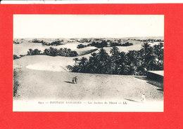 PAYSAGES SAHARIENS Cpa Animée Les Jardins Du Désert    6511 LL - Sahara Occidental