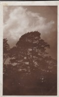 AR32 RPPC - A Large Tree - Trees