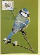 CARTE MAXIMUM - MAXICARD - MAXIMUMKARTE - MAXIMUM CARD - IRAN - OISEAUX - BLAUMEISI - Parus Caeruelus - Uccelli Canterini Ed Arboricoli