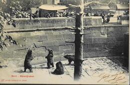 C.P.A. - Suisse > BE Berne > Zoo Avec Des Ours Daté 1903 - TBE - BE Berne