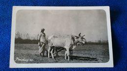 Ploughing India - India