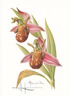 Carte Postale - Orchidée  Ophrys Abeille (Sabot) Signée Et Illustrée Par Buzin - Flowers