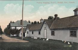 GUELPH, Ontario, Canada, 1900-10s; Poultry Building, O.A.C. - Ontario