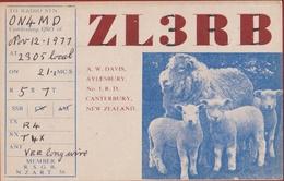 QSL Card Amateur Radio Funkkarte 1977 New Zealand Canterbury Christchurch Aylesbury Lamb Lam Schaap Sheep Agneau Mouton - Radio Amatoriale