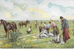 ARGENTINA Argentine - Desplumando Avestruces ( Autruches Ostriches ) Jolie CPA Illustration AMERIQUE DU SUD Sudamerica - Argentine