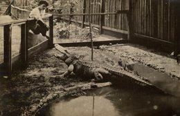FEEDING DUCK CROCODILE COCODRILO Krokodil  17*11 CM Fonds Victor FORBIN 1864-1947 - Fotos