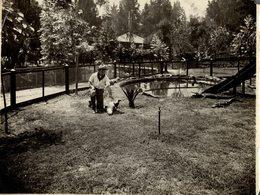 ETAT SEE SCAN  CROCODILE COCODRILO Krokodil 25*20 CM Fonds Victor FORBIN 1864-1947 - Fotos