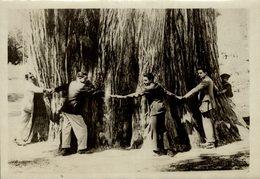 PLUS GRAND ARBRE DU MONDE AHUEHUETE MEXICO  Forest, Xylology, Forestry 18*13 CM Fonds Victor FORBIN 1864-1947 - Fotos