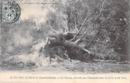 EVENEMENT Catastrophe ( Incendie 14/15 Août 1904 ) 77 FONTAINEBLEAU Le CLOVIS Détruit - CPA ARBRE Tree Bome Boom Albero - Catastrophes