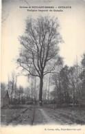 ARBRE Tree - 21 - CITEAUX Environs De NUIT ST GEORGES : Le TULIPIER Importé Du CANADA - CPA - Bome Boom Albero árbol - Bäume