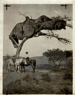 Forest, Xylology, Forestry 20*15 CM Fonds Victor FORBIN 1864-1947 - Fotos