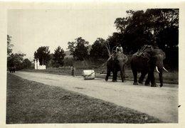 LAOS LAO LES ELEPHANTS ELEFANTES EMPLOYÉS TRACTION INDO CHINE ASIA  18*13 CM Fonds Victor FORBIN 1864-1947 - Lugares