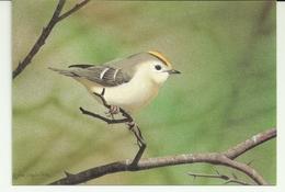 Portugal Postcards Azores Birds Estrelinha - Pájaros