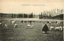 #260619 - 38 VAULX MILIEU étang Des Trois Eaux - Mouton Berger Pâtre - Andere Gemeenten