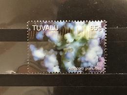 Tuvalu - Steenkoralen (65) 2006 - Tuvalu