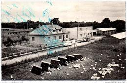 79 SANZAY - La Station Avicole CLAIR MATIN - Sonstige Gemeinden