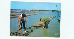 Huitres Sur Ardoise  - Pecheur - Peche  U 1668 - Pêche