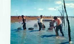 Parc A Huitres - Le Ramassage Des Huitres  - Peche  U 1670 - Pêche