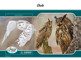 Sierra Leone 2019 Fauna Owls S201903 - Sierra Leone (1961-...)