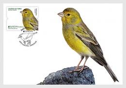 Portugal Madeira 2019 MC Maxi Card EUROPA Bird Saffron Finch Canario-da-terra Birds Oiseaux Oiseau - 2019