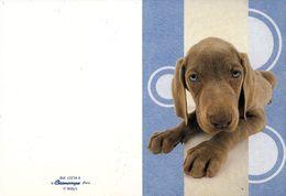 Calendrier °° 2009 - éditeur - Chien Aux Yeux Bleus - 7x10 - Calendari