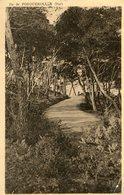 Ile De PORQUEROLLES - La Corniche De Notre Dame Délicieuse Promenade Sous Bois Forêt - Porquerolles