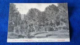 A Corner In The Botanical Gardens Queenstown South Africa - Südafrika