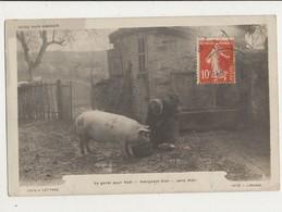 NOTRE PAYS LIMOUSIN LE GORET POUR NOEL MANGEAN BIEN SERA MUR CPA BON ETAT - Pigs