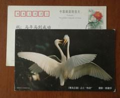 Cattle Egret,Fall In Love,China 2000 Fuyang Kingdom Of Egret Bird Advertising Postal Stationery Card - Birds