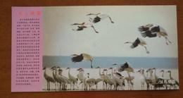Siberian White Crane Bird Inhabiting,China 2000 Mt.Lushan Migratory Bird Paradise Landscape Advert Pre-stamped Card - Grues Et Gruiformes
