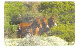 North Cyprus - Nord Nypern - K.K.T.C. - Donkey - Esel - 400 Units - 07/209 - Used - Cyprus