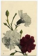 TUCKS FLOWERS : CARNATIONS - Flowers