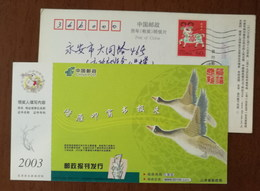 Swan Goose Bird,China 2003 Shandong Post Office Postal Newspaper Distribution Advertising Pre-stamped Card - Oies