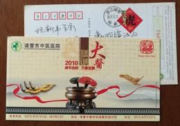 Ganoderma Lucidum Fungi,fungus,ginseng,Cordyceps Sinensis,CN 10 Zhuji Hospital Of Traditional Chinese Medicine PSC - Medicine