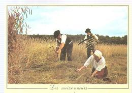 Agriculture Les Métiers D'antan Les Moissonneurs - Cultures