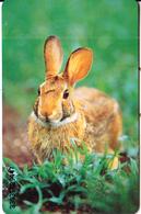 GERMANY(chip) - Tiere Der Heimat 1/Rabbit(O 685 A), Tirage 1000, 03/93, Mint - O-Series: Kundenserie Vom Sammlerservice Ausgeschlossen